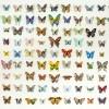 Butterflies: 9 x 11 = 99