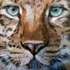 'Amur Leopard' by Steve Nayar