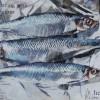 Three herring