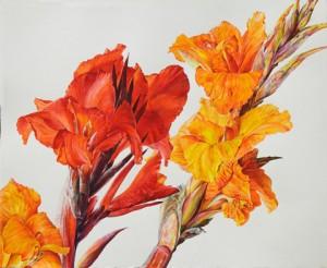 Red-and-orange-Cannas